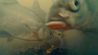 Рыбалка на Фидер и Подводная съемка Лещ, Плотва, Щука, Красноперка