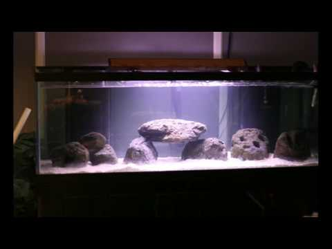 180 gallon fish tank setup youtube for Youtube fish tank
