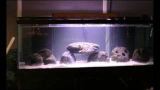 180 Gallon Fish Tank Setup