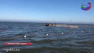 В Дагестане осваивают новые технологии добычи рыбы