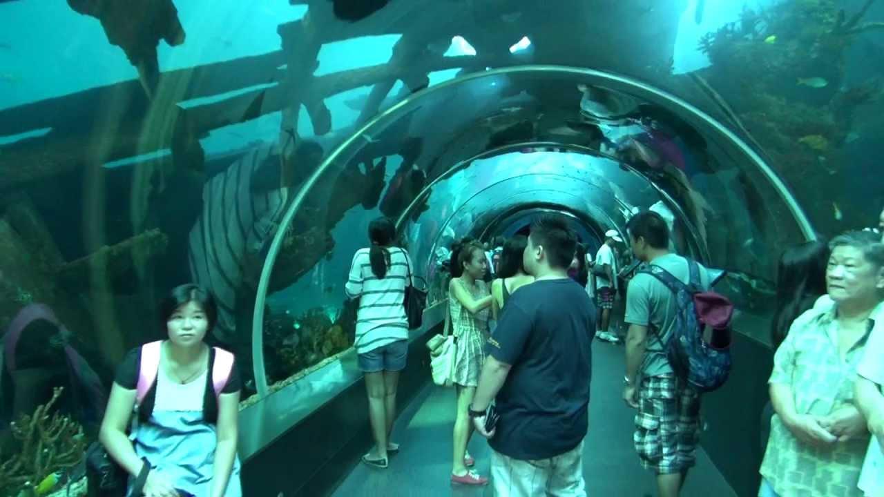 Fish aquarium in sentosa -