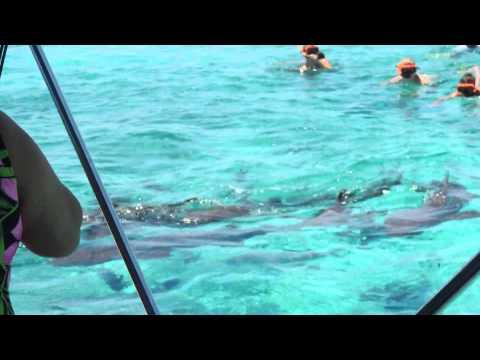 Snorkeling & Sharks Prt.1 - Isla Bonita, Belize (HD)