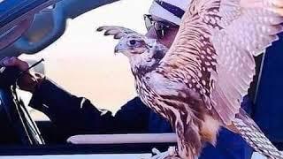 على العز يا باكر تجيك امنيات الطود كلمات الشاعر أحمد المنصوري أداء جميل ابو غليون