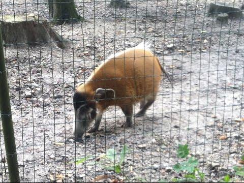 Le zoo de jurques en normandie doovi for Zoo haute normandie