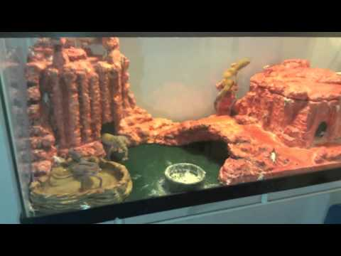 Diy Nice Custom Leopard Gecko Desert Canyon Theme Setup Tips Lizard
