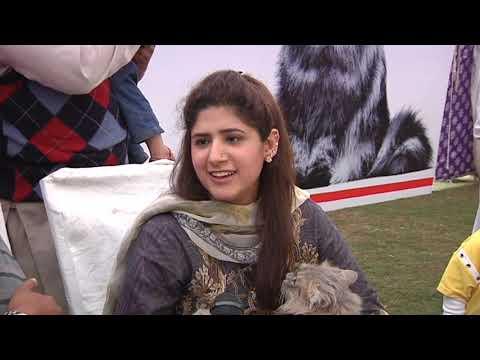 Lahore cat show 24 03 19