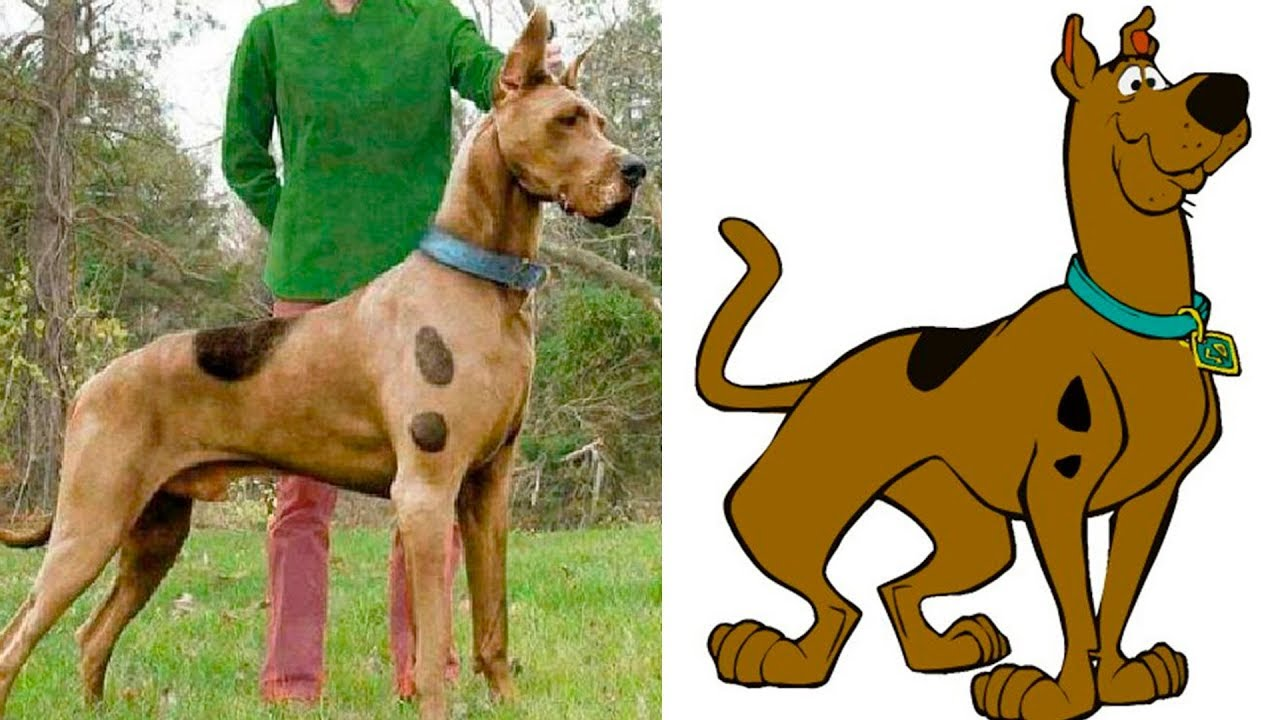 Download 🐶 20 kids cartoon characters that exist in real life