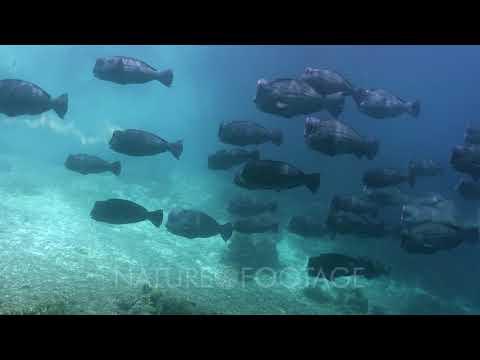Manta Rays and schools of fish in Raja Ampat - Video Decor Reel