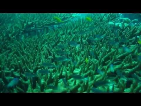 Diving Koh Tao & Koh Phi Phi 2014 HD