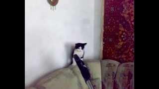 Кошка падает!