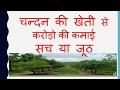 Chandan tree farming चन्दन की खेती sandalwood tree farming करोडो की कमाई सच या जूठ