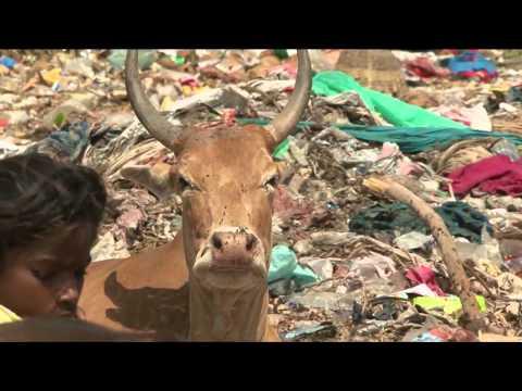 The Plastic Cow