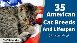 35 American cat breeds and Lifespan (US originating) ! Cat Health Tips ! Pet Lovers 2021