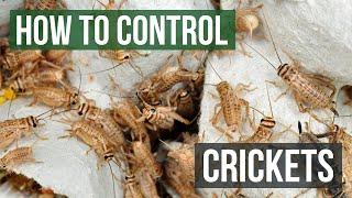 How to Control Crickets by Solutions Pest Control