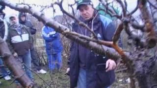 Przycinanie drzew na działkach
