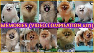 MEMORIES (POM VIDEO COMPILATION)