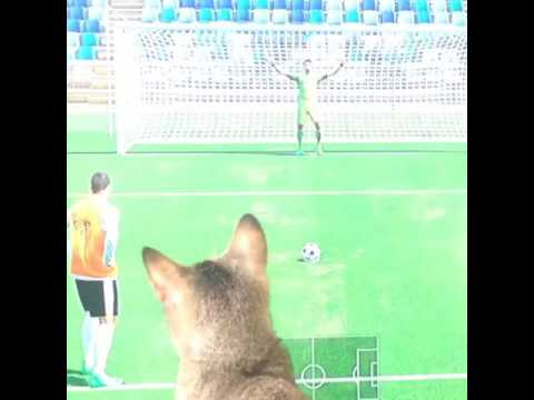 Cute cat playing fifa!!