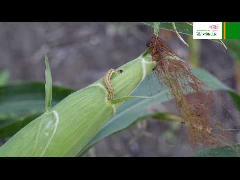 Биологические методы борьбы с вредителями сельскохозяйственных культур