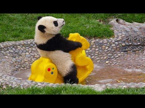 Kim Daha Akıllı? Bil yada Öl! - Panda ile Roblox Are You Smart?