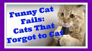 Funny Cat Fails: Cats that forgot how to cat