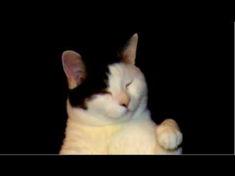 kitty cat dance lyrics