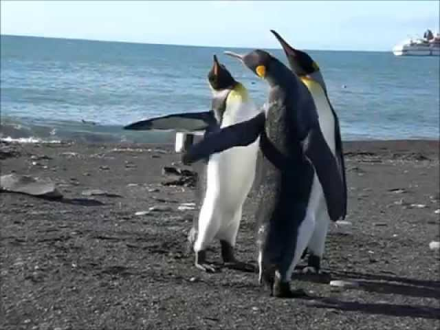 Penguin Fight