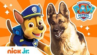 How To Be a PoĮice Pup! 🚨 w/ PAW Patrol's Chase & REAL Dogs! | PAW Patrol | Nick Jr.