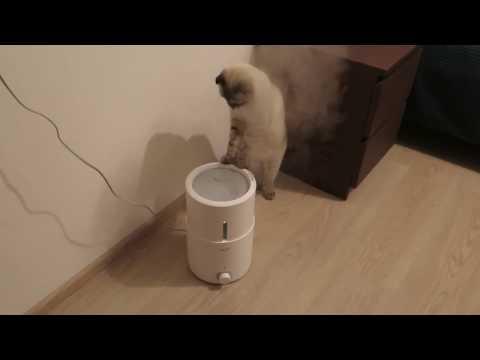 Любознательный Коть