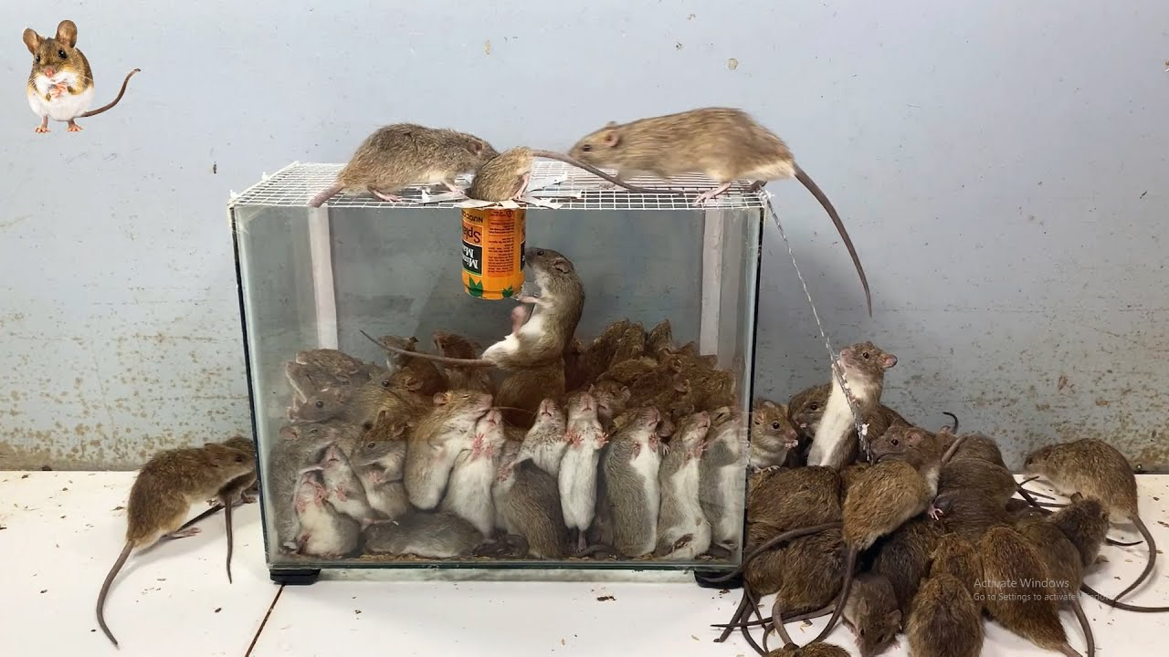 Top 10 best mouse traps / mousetrap with glass cage and plastic tube / Lots of rats in the trap