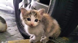 아이고 길냥이가 또 애기 물어왔어요. stray kitten