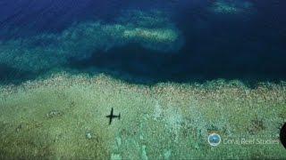 Grande barriera corallina: un disastro senza precedenti