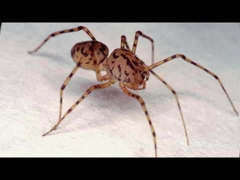 Как избавиться от пауков