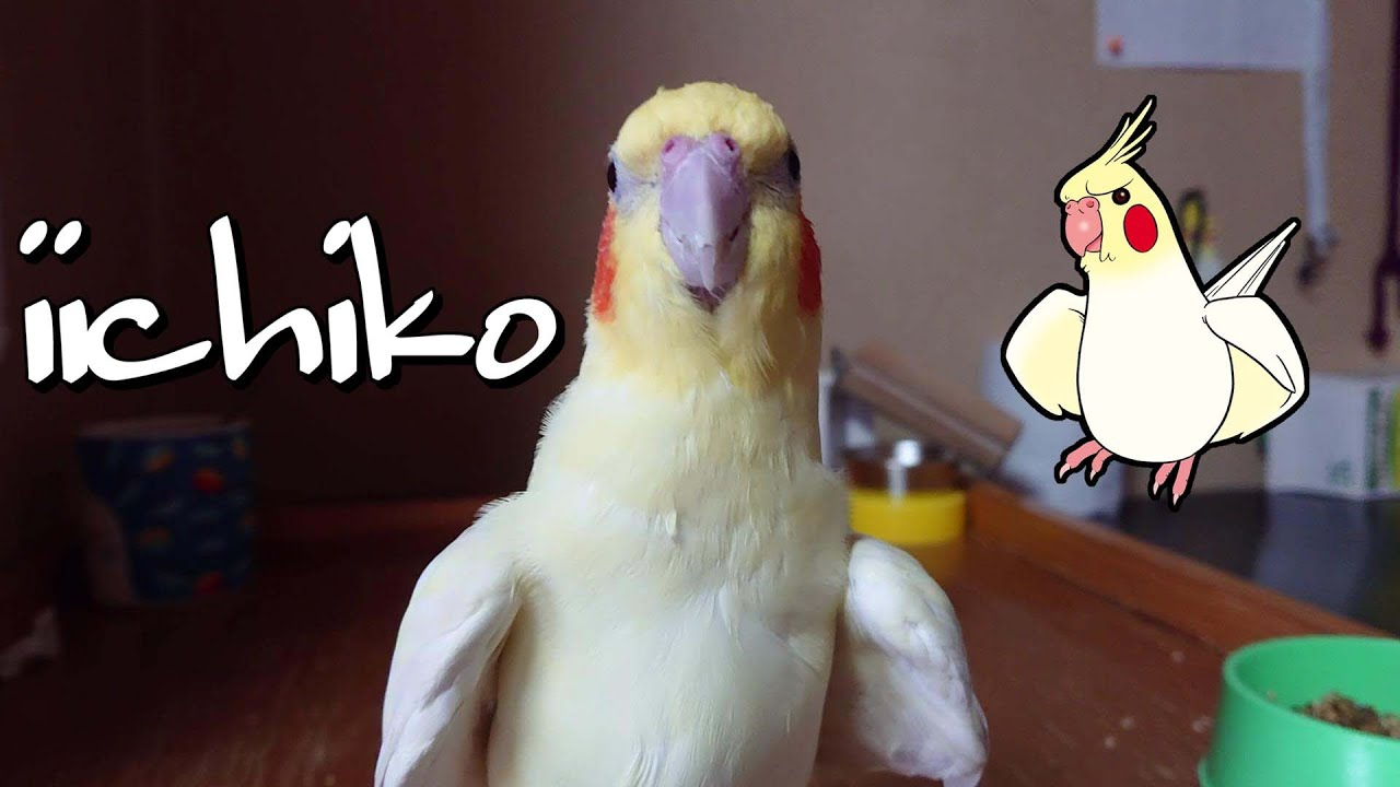 やっぱりカメラが好き( He likes the camera !!!)