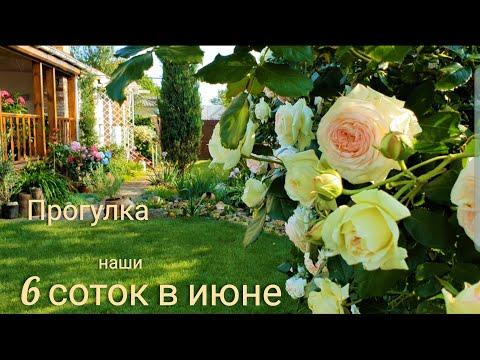 Наш прекрасный сад в июне. Приглашаем на прогулку.