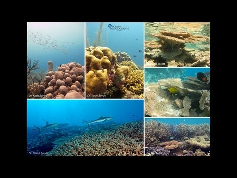 Ocean Acidification: Can Corals Cope?
