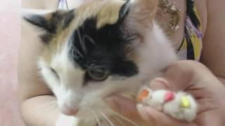 Как подобрать размер антицарапок из S M L | Видео #2 выбираем для 2й кошки