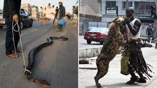 Most Unusual Pets People Own Around The World!