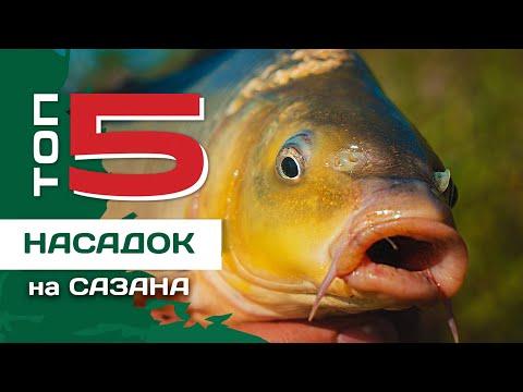 ТОП 5 насадок для ловли сазана от Евгения Конюшевского. Рыбалка на картошку.