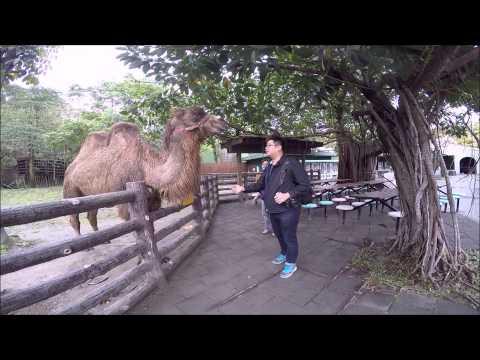 Taipei Zoo Animal