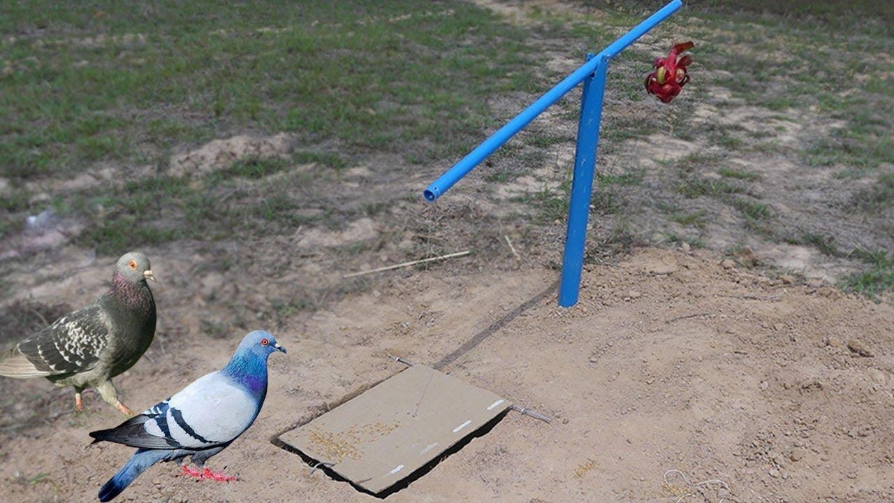 DIY Deep Fall Pigeon Bird Trap Using Cardboard