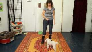 How To Teach Spin - Dog Training