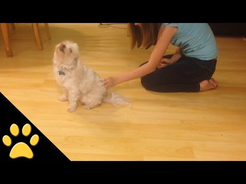 Ticklish Dog Scoots Around the Floor