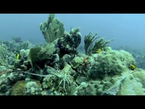 Eli's first scuba dive