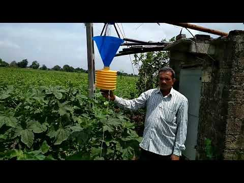 Use of light traps for control  of pest of crops and orchards