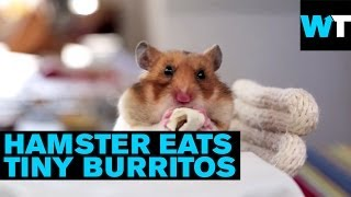 Tiny Hamsters Eating Tiny Burritos | What's Trending Now