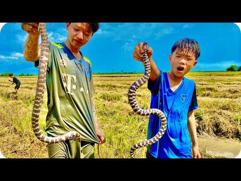 Anh Ba Phải   Sinh Tồn Ngoài Đồng - Bắt Được Cặp Rắn 2 Đầu   Survival Challenge