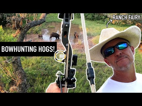 Bowhunting BIG Hogs in TEXAS w/Ranch Fairy!!!
