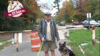 Toronto German Shepherd Dog Training