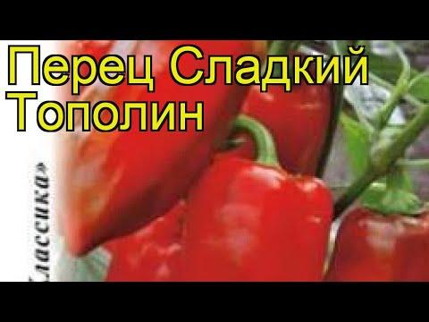 Перец сладкий Тополин. Краткий обзор, описание характеристик, где купить семена cápsicum ánnuum