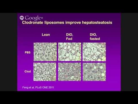 Dr. Haiyan Xu, Obesity-related insulin resistance: the role of adipose inflammation